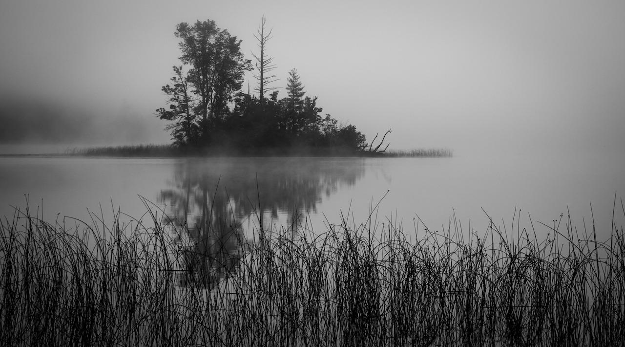 Misty Morning - Jane Wachutka - SCVCC