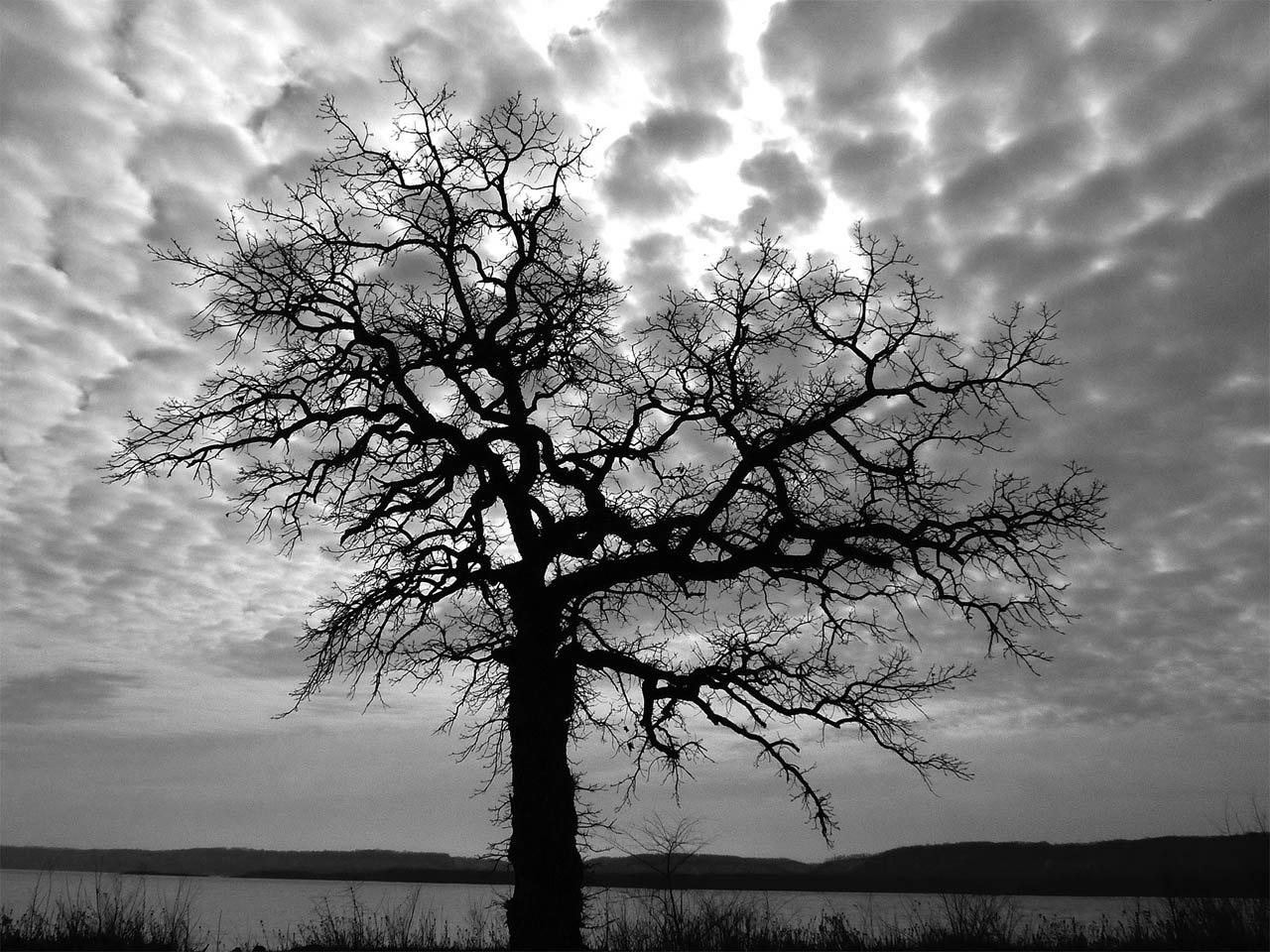 Oak on the Mississippi - Mark Stonich - FSSPCC
