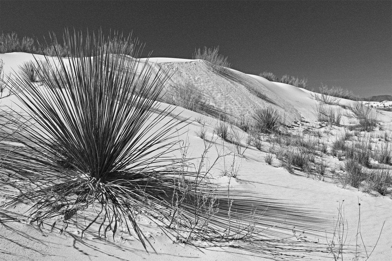 White Sands - Tom Birrenbach - TNCPC