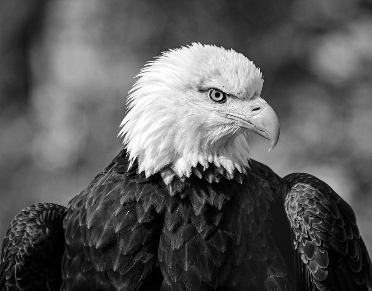 Eagle Eye - Peter Rose - MCC