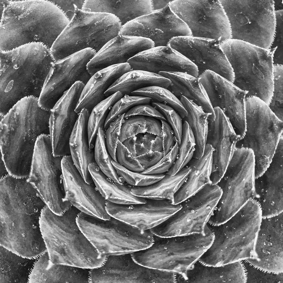 Geometric Succulent - Sarah Hefty - WWPC