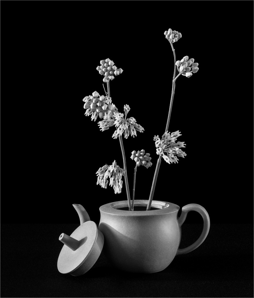 Milkweed in Teapot - Peggy  Boike - SCVCC