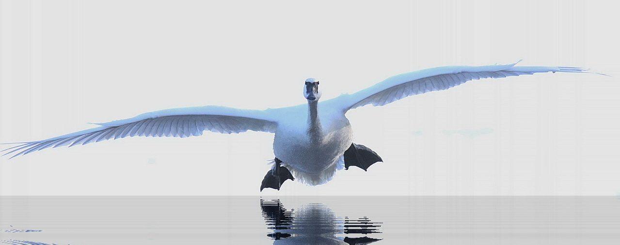 Majestic Landing - Chuck Kartak - SCVCC