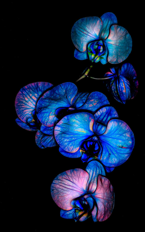 Orchid Abstract - Valarie Anderson - SPCC
