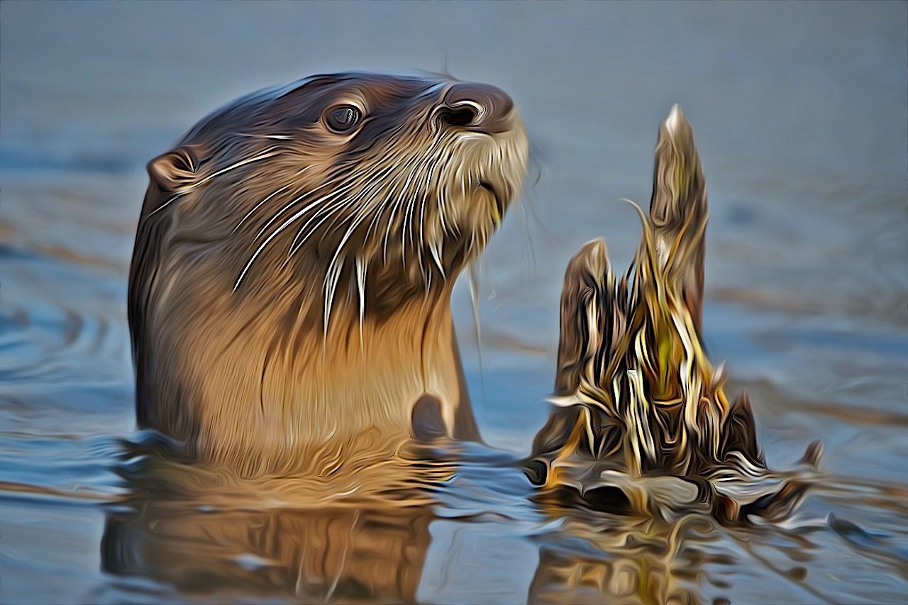 River Otter - Don Specht - MNPC