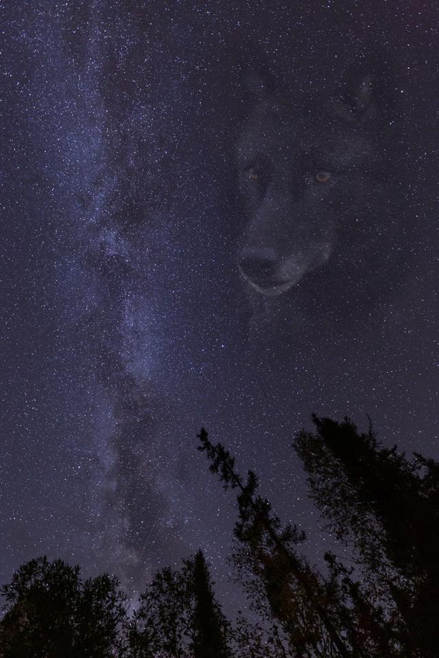 Night of The Black Wolf - Melissa Anderson - WWPC
