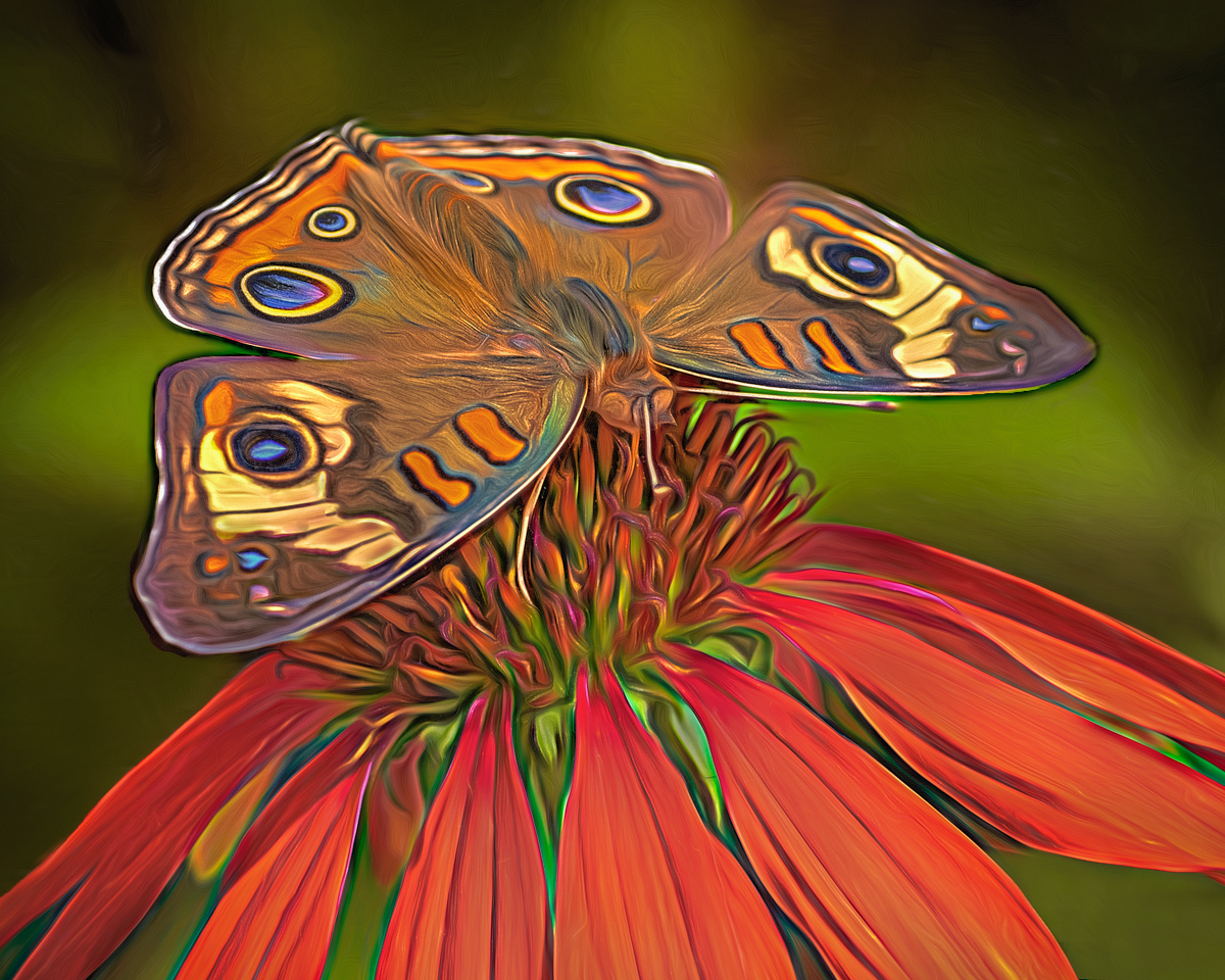 Award - Butterfly on Coneflowe - Marianne Diericks - Western Wisconsin Photography Club