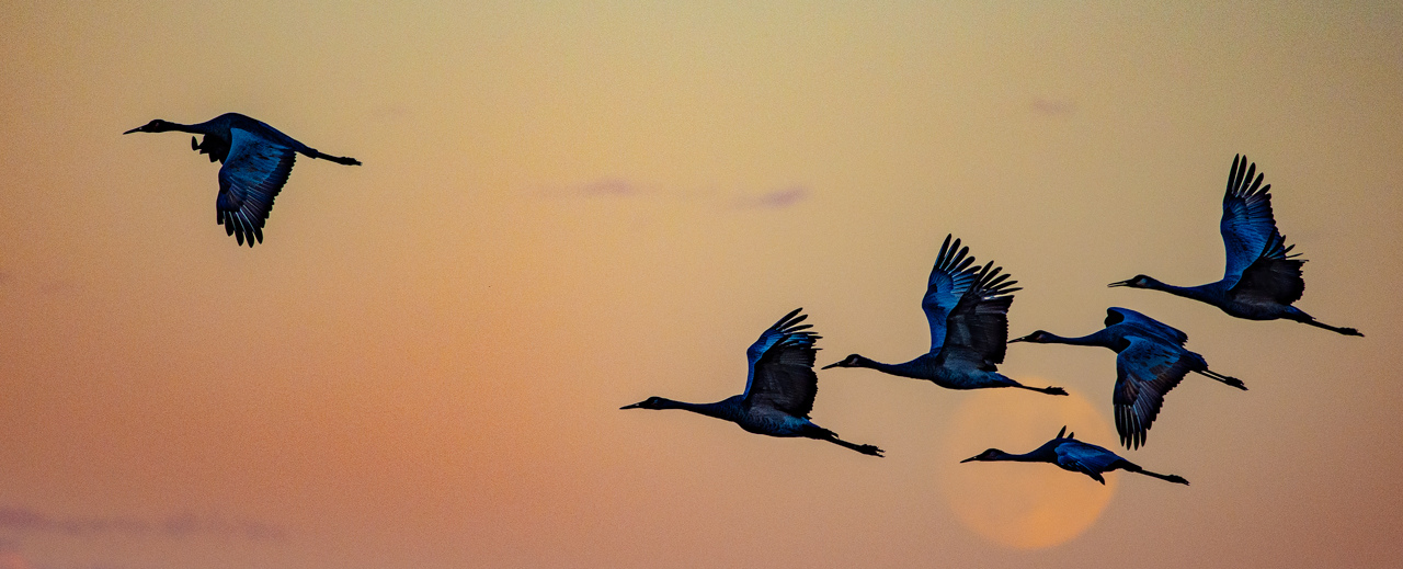 Honorable Mention - Crex Cranes at Sunrise - Hubert Cole - Western Wisconsin Photography Club