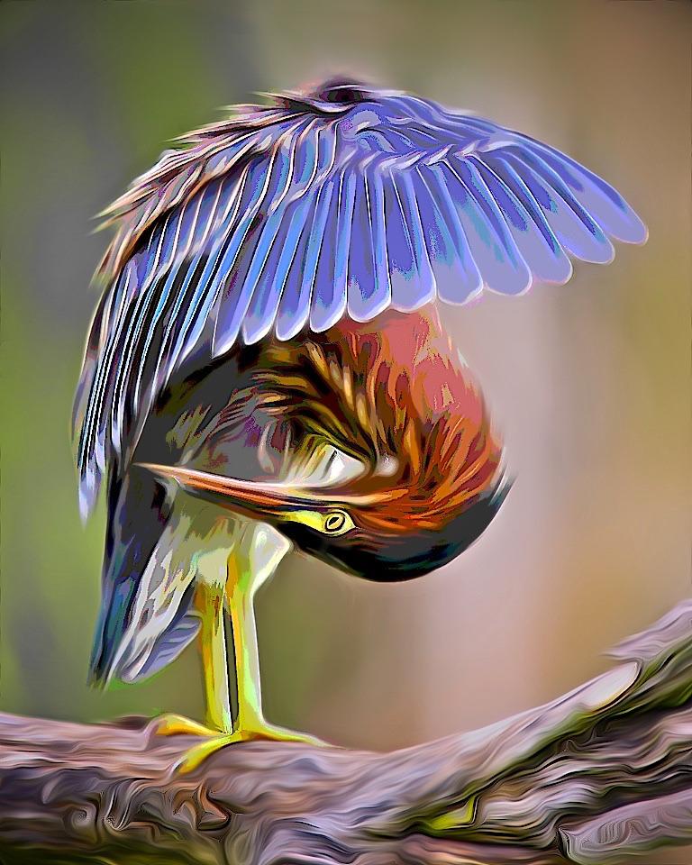 Award - Grooming Green Heron - Don Specht - Minnesota Nature Photography Club