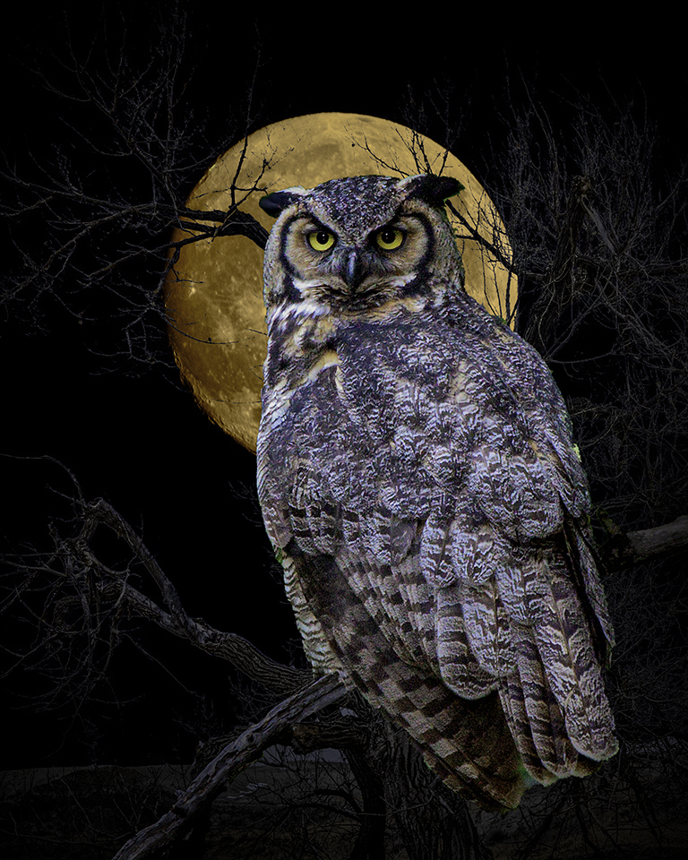 2nd Place Runner Up - Harbinger in the Moonlight - J Arthur Anderson - Fort Snelling State Park Camera Club
