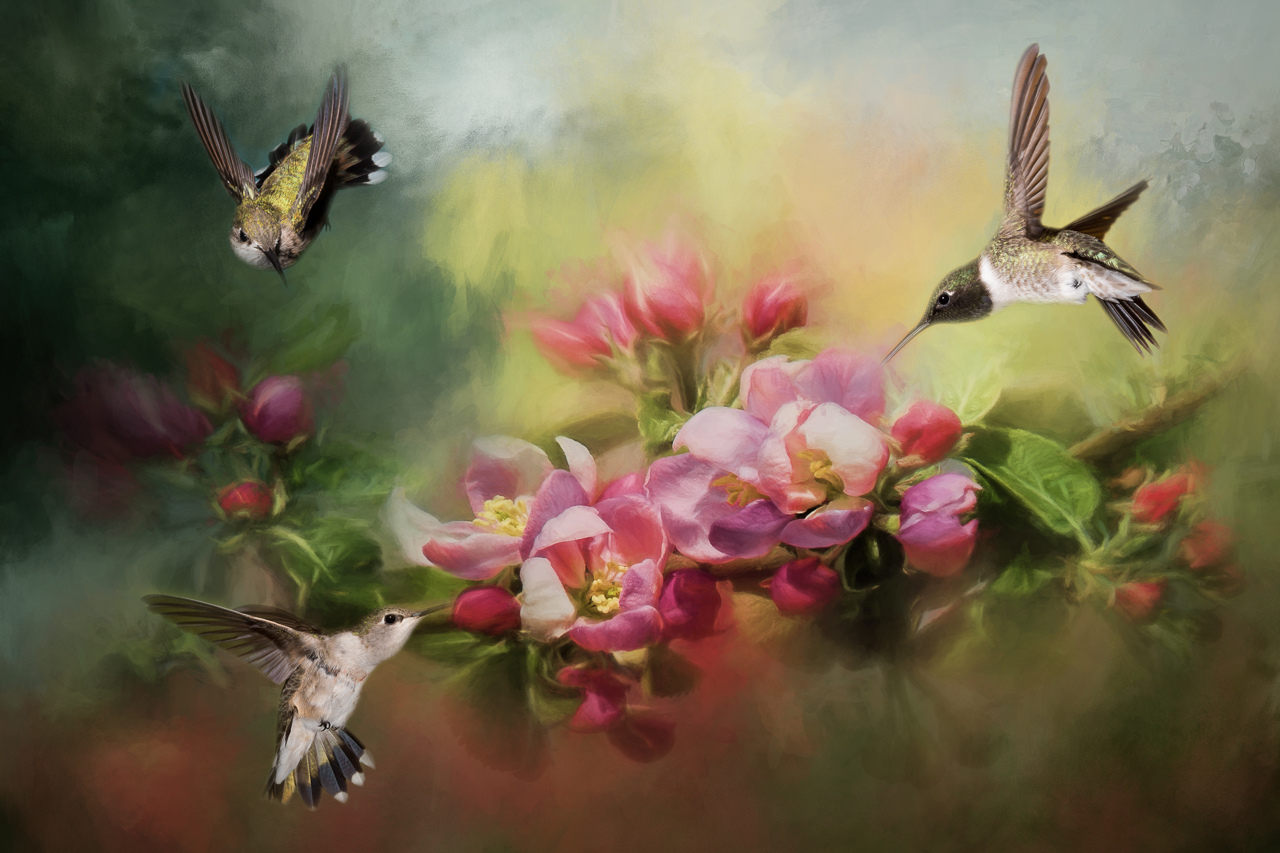 Honorable Mention - Three Hummingbirds - Melissa Anderson - Women's Color Photo Club