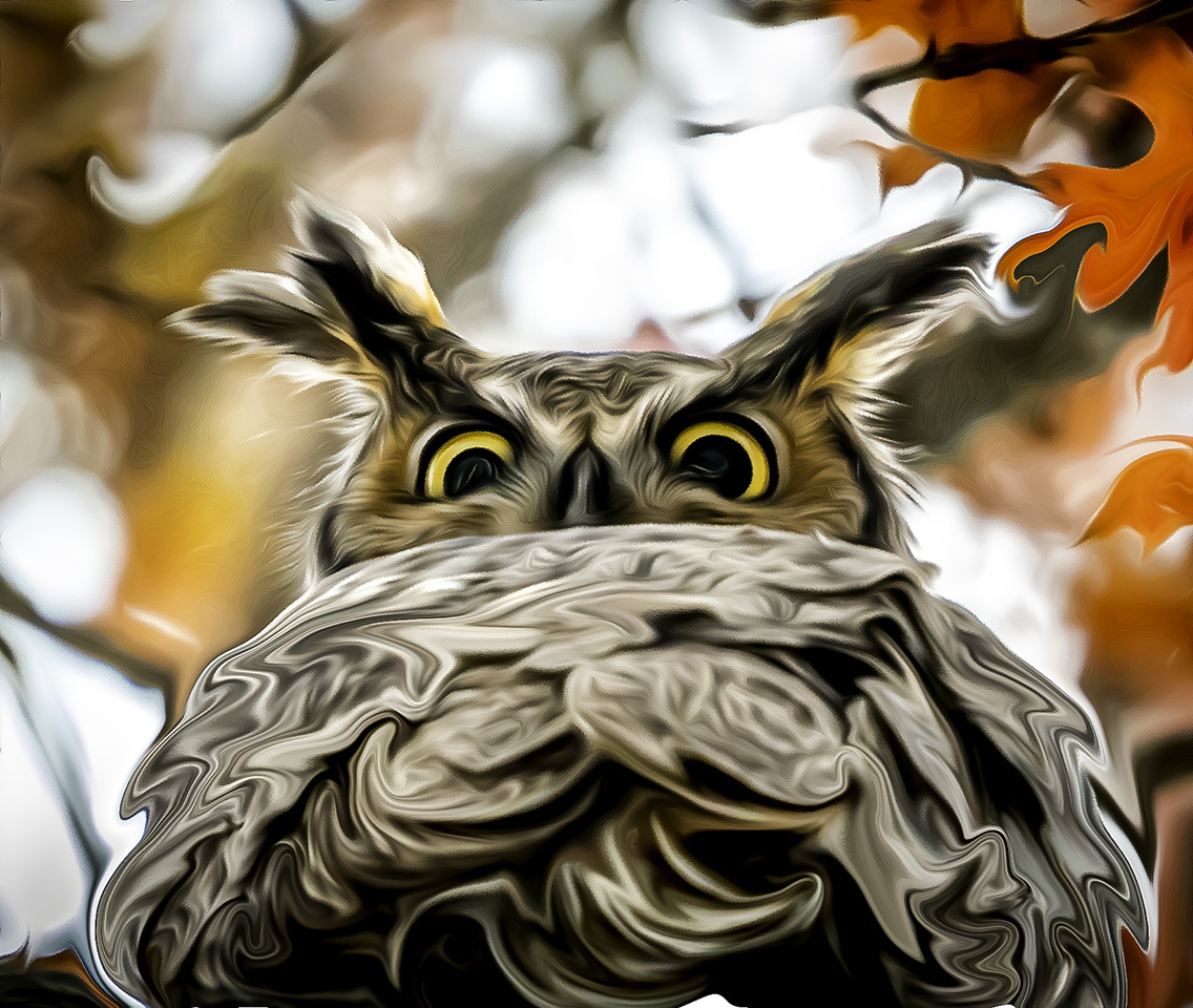 Honorable Mention - Wise Owl - Jill Bauer - Tamarack Nature Center Photo Club