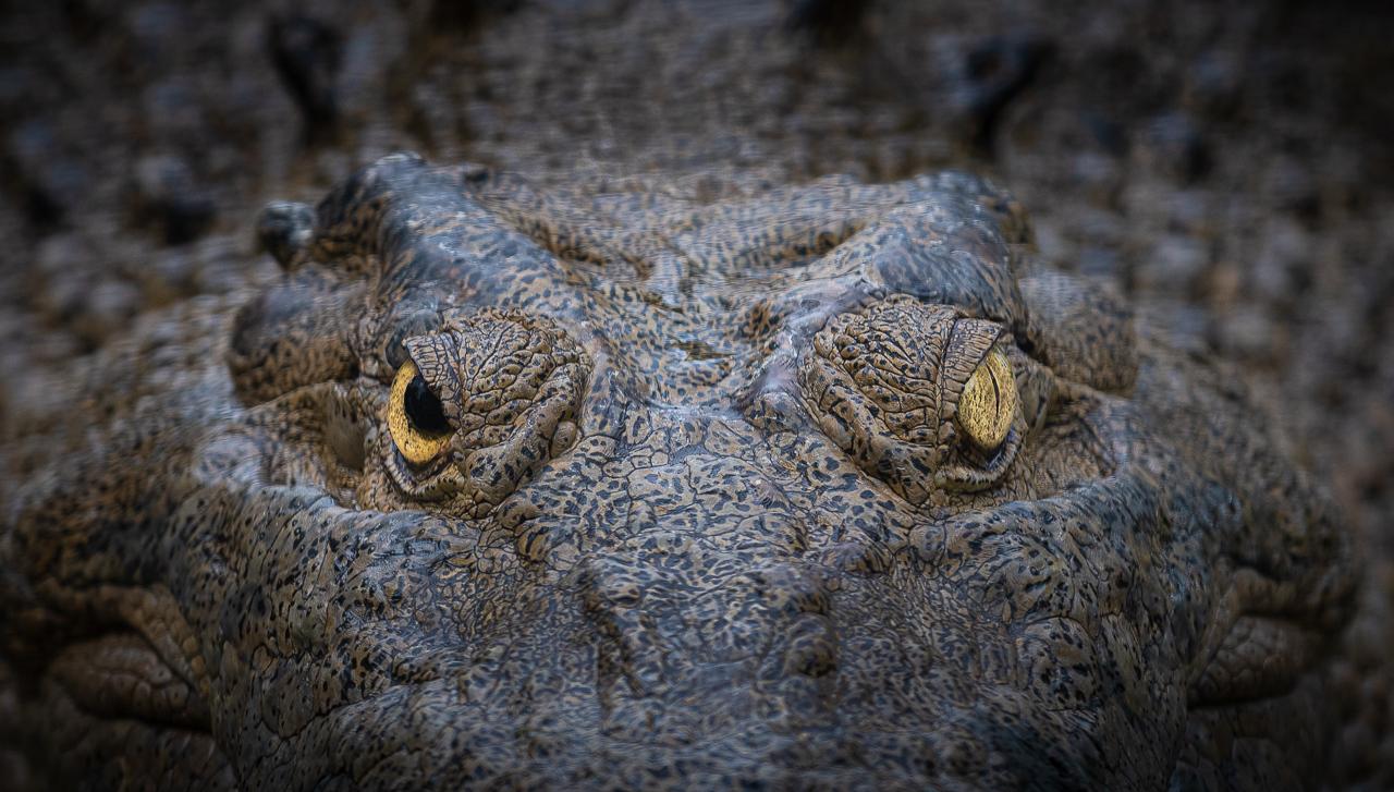 Croc - Paul Bullock - TNCPC