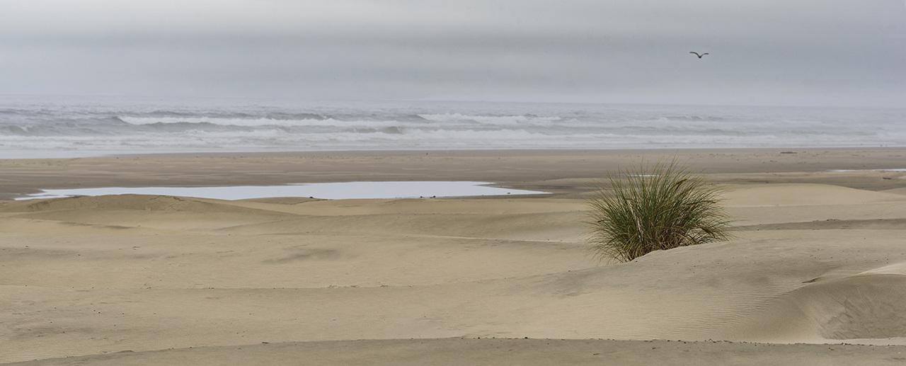 Low Tide - Patrick Miller - NMPC