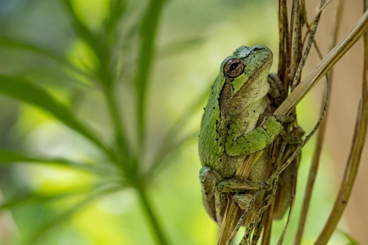 Tree Frog - Maranda Miller - MDPC