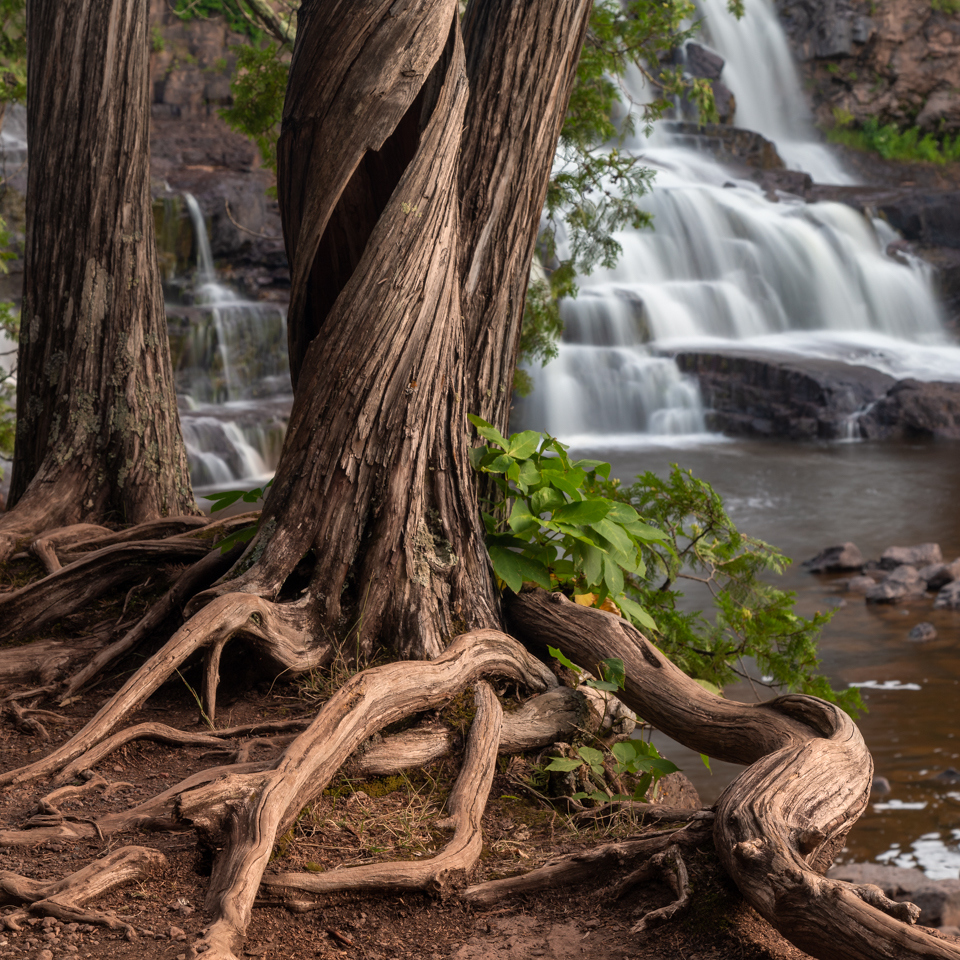 Roots and Falls - Terry Butler - WWPC