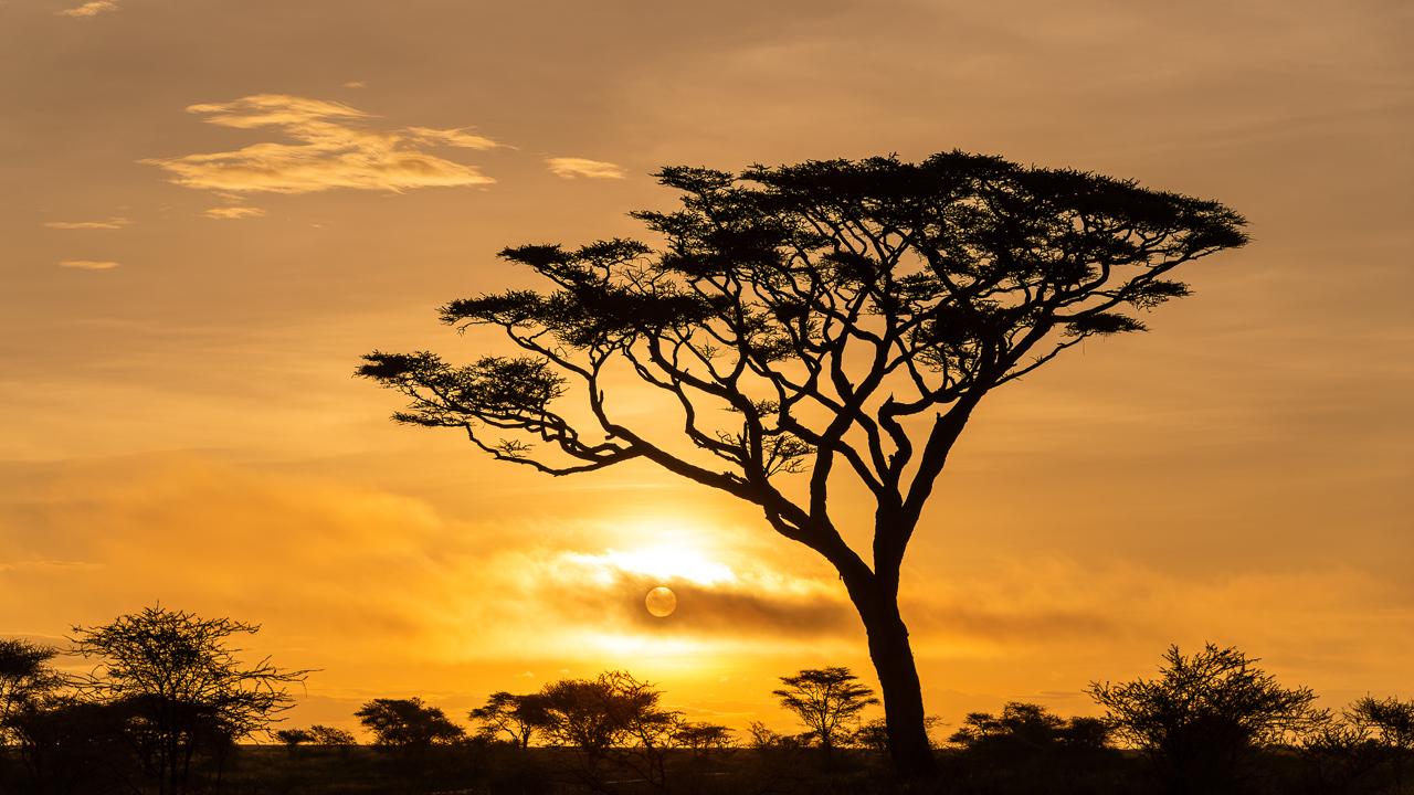 Honorable Mention - Acacia Sunrise - Diane Herman - Minnesota Nature Photography Club