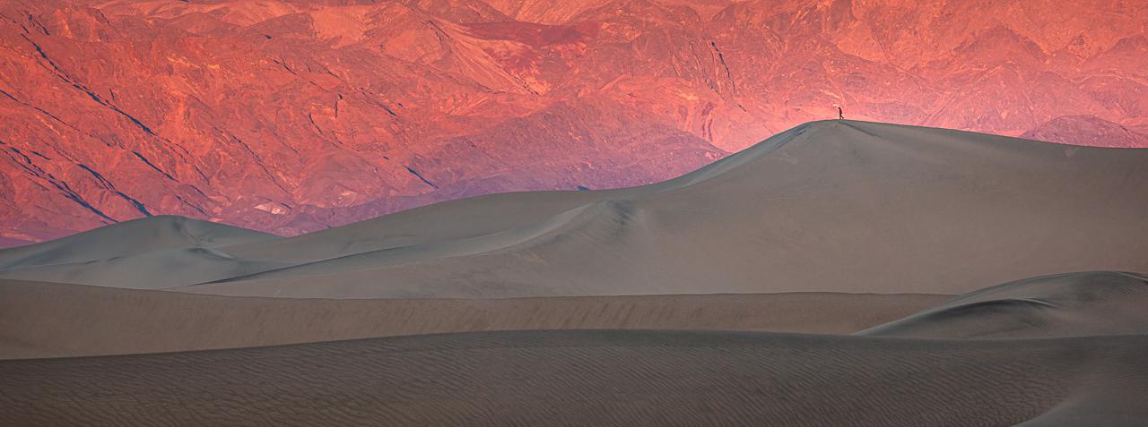 Dune Walker at Dawn - Deanne Probst - MNPC