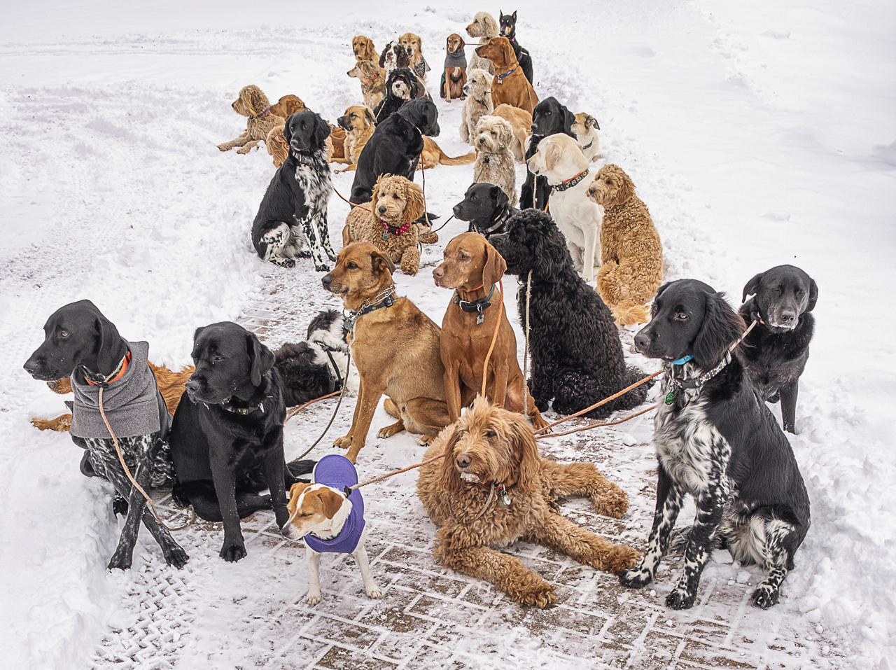 How Many Dogs - Paul Stearns - MCC