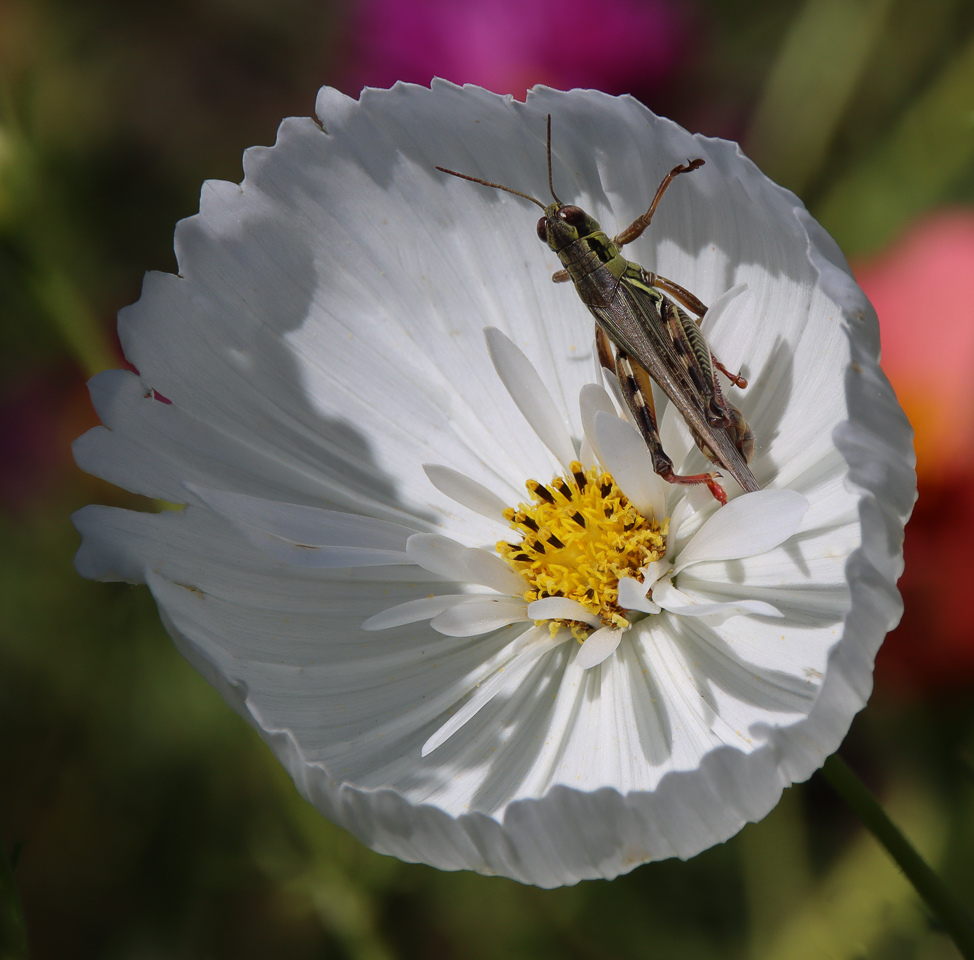 Grasshopper in the Cosmos - Craig Peterson - MVPC