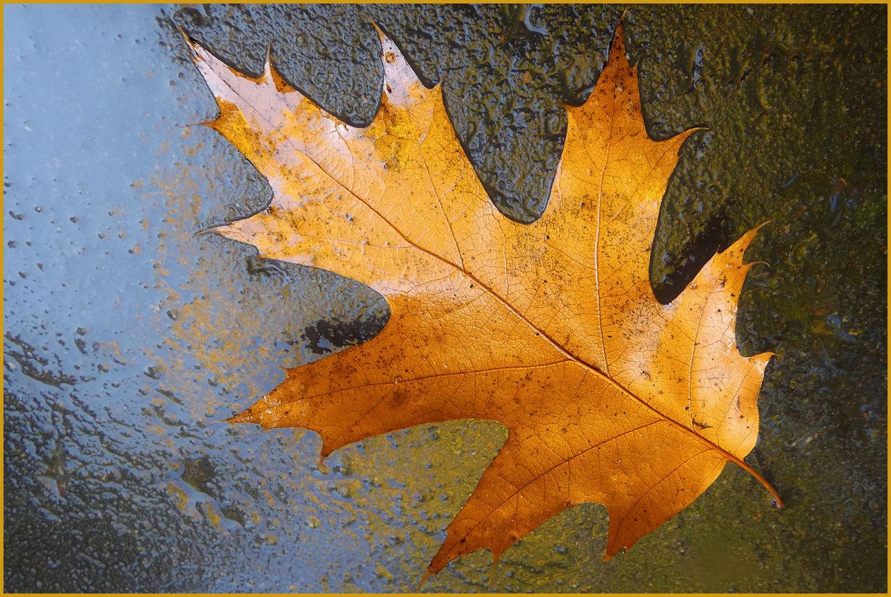 Leaf on Wet Asphalt - Nancy Crombie - SCVCC