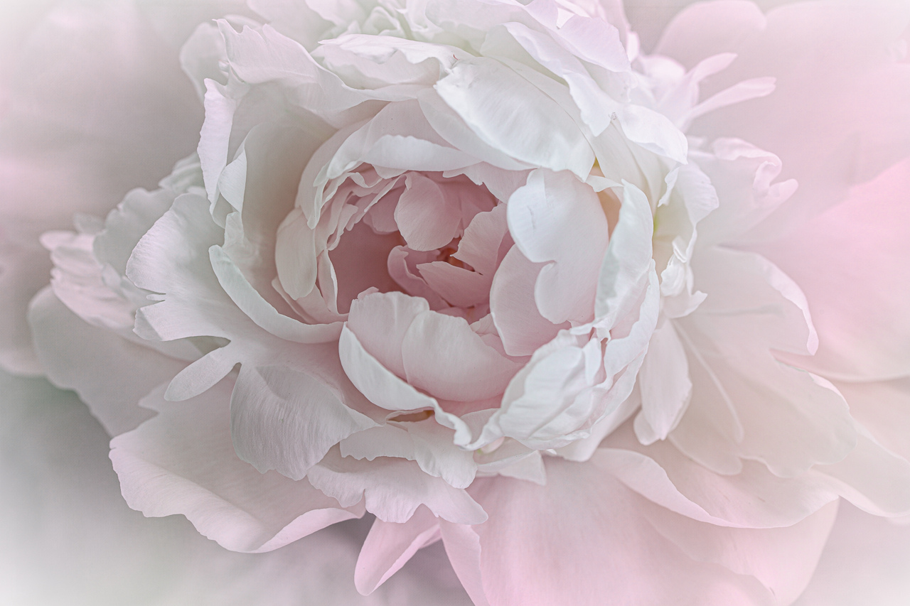 Pale Bloom - Marilyn Victor - WCPC