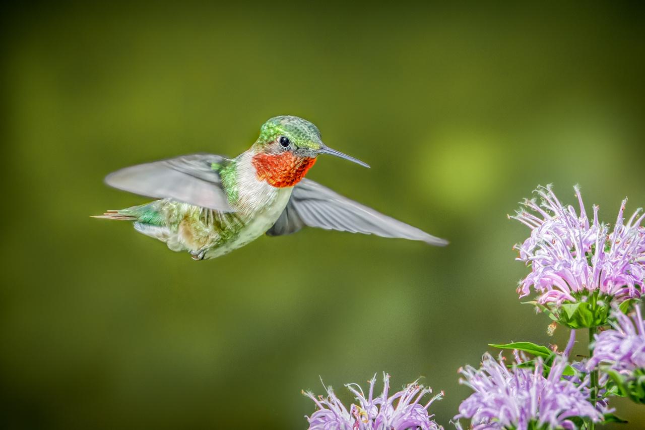 Sunlit Hummingbird - Marianne Diericks - WWPC