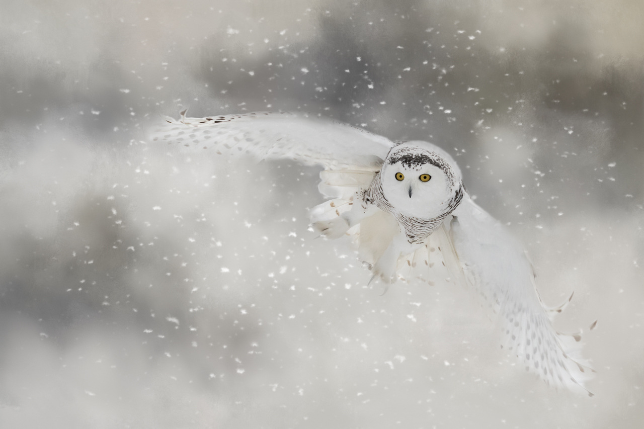 2nd Place Runner Up - Landing Gear Down - Melissa Anderson - Western Wisconsin Photography Club