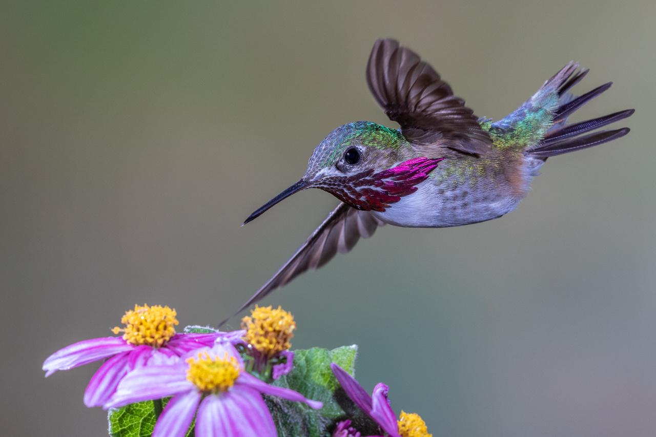Award - Beauty in Flight - Melissa Anderson - Western Wisconsin Photography Club